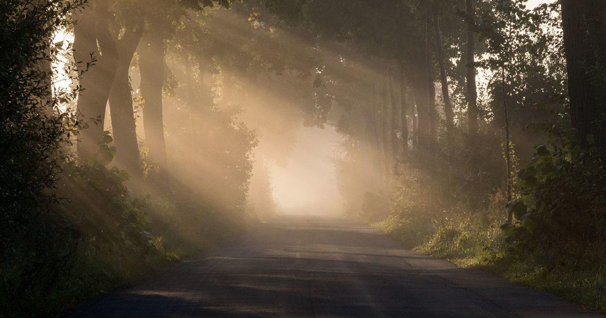 Investire sul green: una scelta non solo eticamente di valore, ma anche economicamente vincente