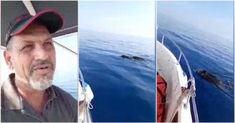 Siracusa, pescatore si imbatte in due cinghiali che nuotano a 5 miglia dalla costa – Video