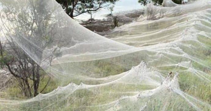 """""""L'apocalisse dei ragni"""": sono in milioni e le loro enormi ragnatele ricoprono ogni cosa in Australia. Le immagini impressionanti"""