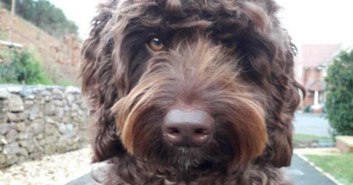 Digby, il cane eroe che ha salvato la vita a una donna che si stava gettando da un ponte