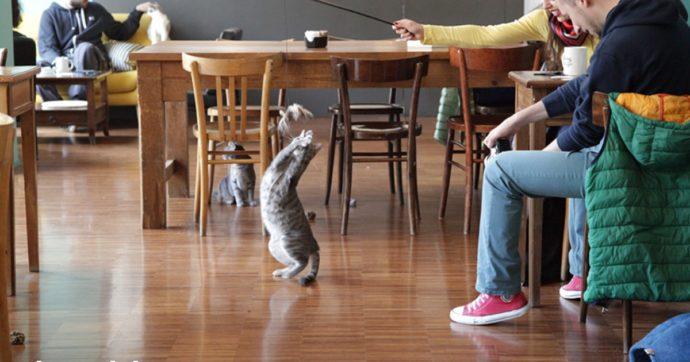 """Crazy Cat Café, bannato il profilo dello streamer """"Il Gabbrone"""": ecco cosa è accaduto al locale milanese"""