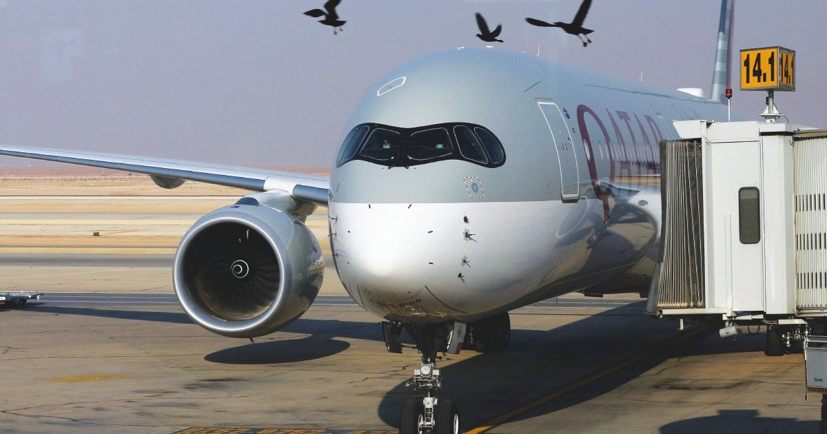 """Treviso, esposto in Procura sull'aeroporto: """"Troppi uccelli, pericoloso aumentare i voli"""""""