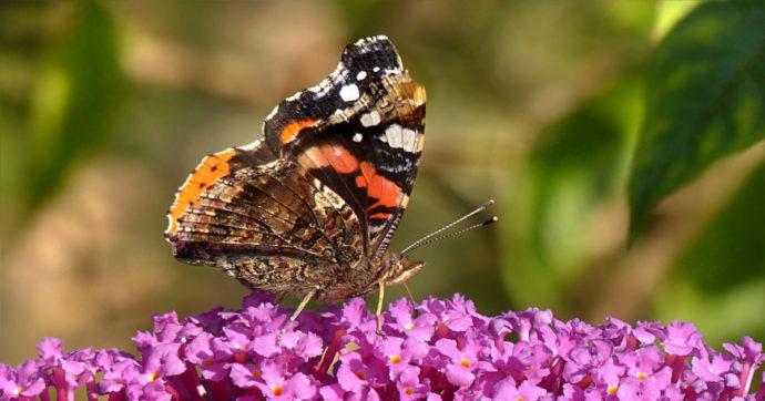 L'effetto farfalla non è solo una metafora: le parti talvolta si invertono