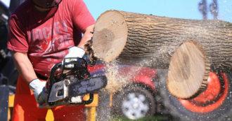"""Rinnovabili, le norme Ue non fermano la deforestazione. Greenpeace: """"Non si combatte cambiamento climatico tagliando alberi"""""""