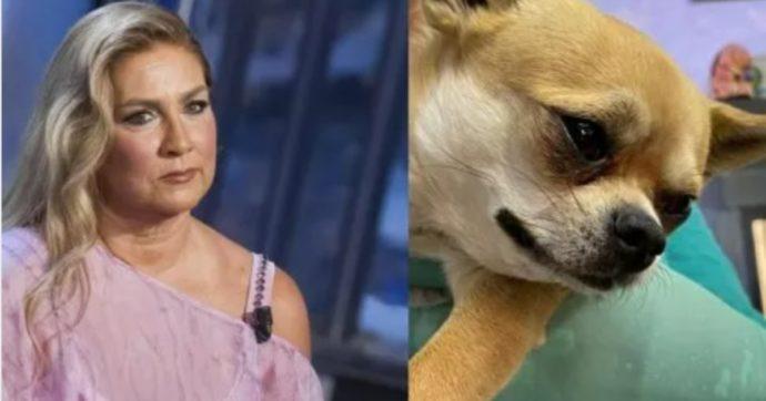 """Romina Power in ansia per Taquito: """"Gli è entrato un forasacco nel naso"""""""