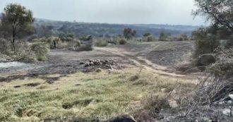 """Incendi in Sardegna, strage di animali nelle campagne. Coldiretti: """"Una catastrofe. Allevatori impegnati in una corsa contro il tempo"""""""