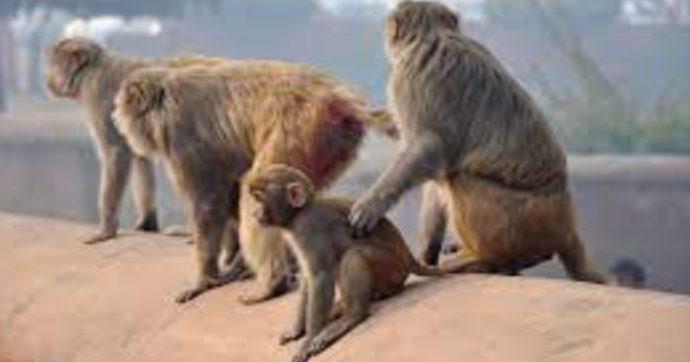 Scimmie chiuse in sacchi di juta, avvelenate e picchiate: trovate morte o ferite