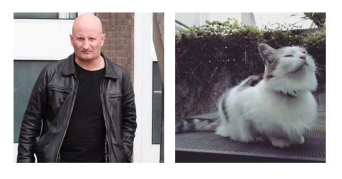"""""""Il killer dei gatti"""" condannato a 5 anni: """"Ha agito con crudeltà"""". I piccoli felini accoltellati e lasciati davanti alle case"""