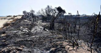 Interessi sulle riserve naturali e il fotovoltaico: l'occhio della commissione Antimafia sugli incendi in Sicilia. Ma la politica va a rilento