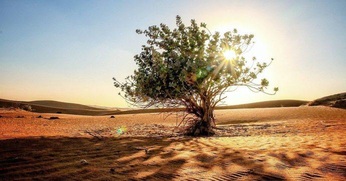 Niger, piantare alberi nella sabbia perché l'indipendenza metta radici