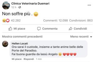 """Incendi Sardegna, è morto il cane Angelo. Oltre 12 mila i commenti sotto il post dei veterinari: """"Ora non soffre più"""""""
