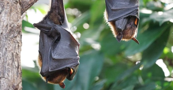 Comunicazione e pandemia, dal pipistrello al no-vax: alcuni esempi di parole simboliche
