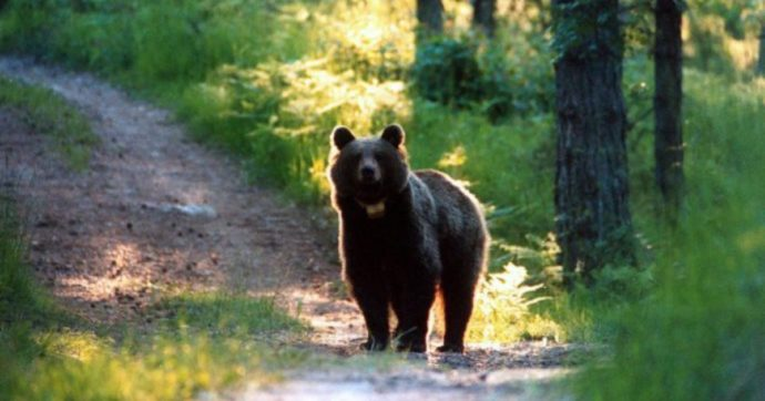 L'alfabeto degli orsi: A come Amore
