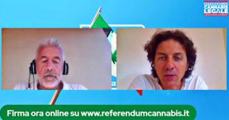 """Referendum cannabis, 50mila firme in sei ore. Cappato: """"I partiti politici si assumano la responsabilità di scegliere da che parte stare"""""""