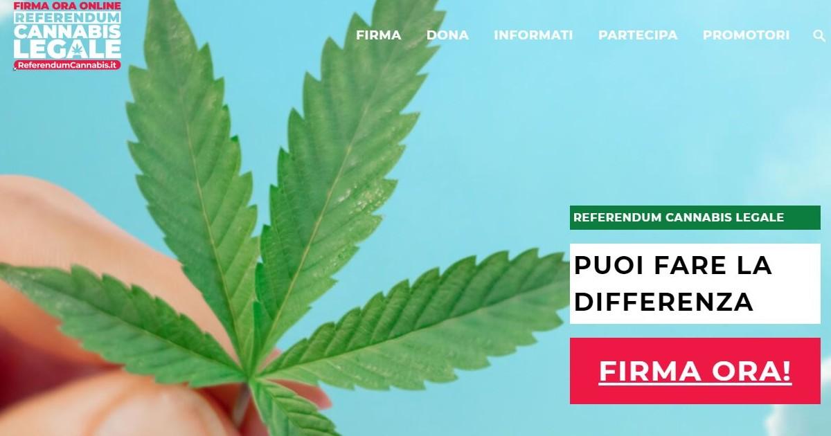 Cannabis legale, in 4 giorni raccolte 420 mila firme per il referendum. Si  avvicina l'obiettivo 500 mila, ben prima della data limite - Il Fatto  Quotidiano