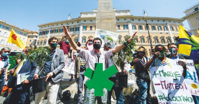 """Referendum Cannabis Legale, i promotori: """"Raccolte 491.933 firme, siamo a un soffio dal raggiungimento delle 500mila"""""""