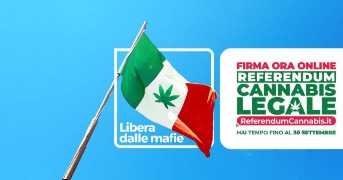 Cannabis legale, tutto quello che c'è da sapere sul referendum: dalla coltivazione per uso personale alle condotte che restano reato