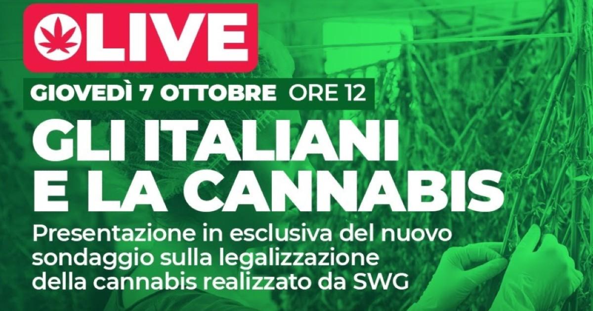 Referendum cannabis, i risultati del sondaggio sulla legalizzazione e l'informazione degli italiani sul tema: segui la diretta tv