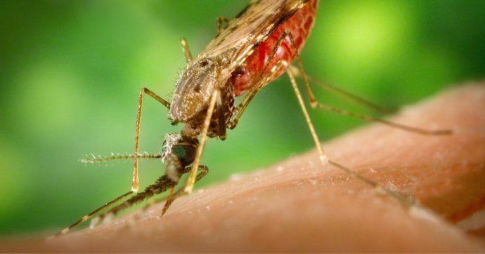 Malaria, dubbi e interrogativi sulla distribuzione del vaccino tra i bimbi africani